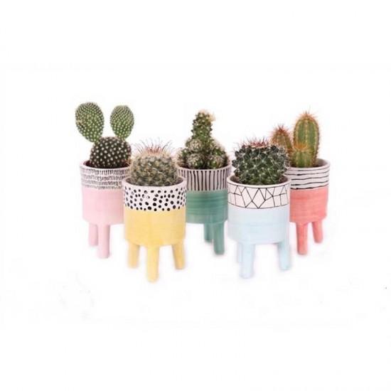 Plantophile - Cactus et son petit pot Willemstad