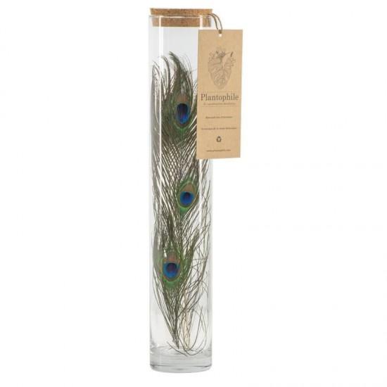 Plantophile - Grand tube de plumes de paon