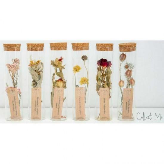 Plantophile - Tube moyen de fleurs séchées