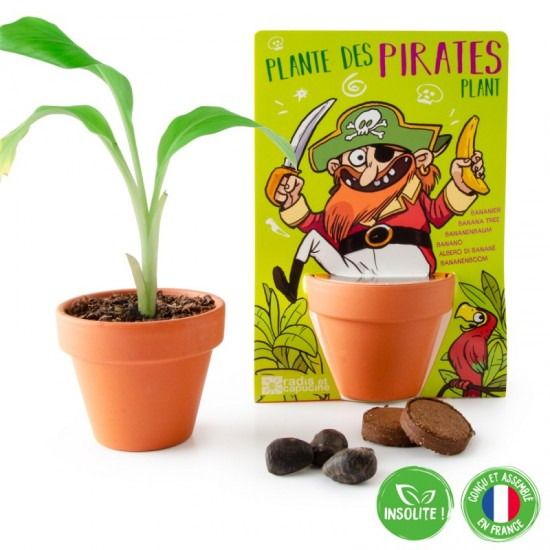 Radis et Capucine - Plante des pirates